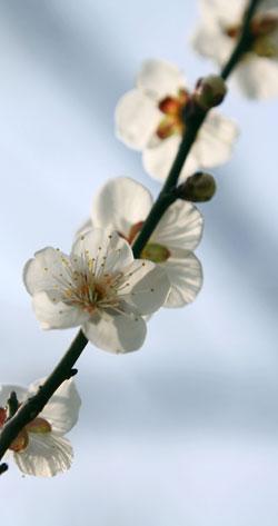 swift_media_a_blossom